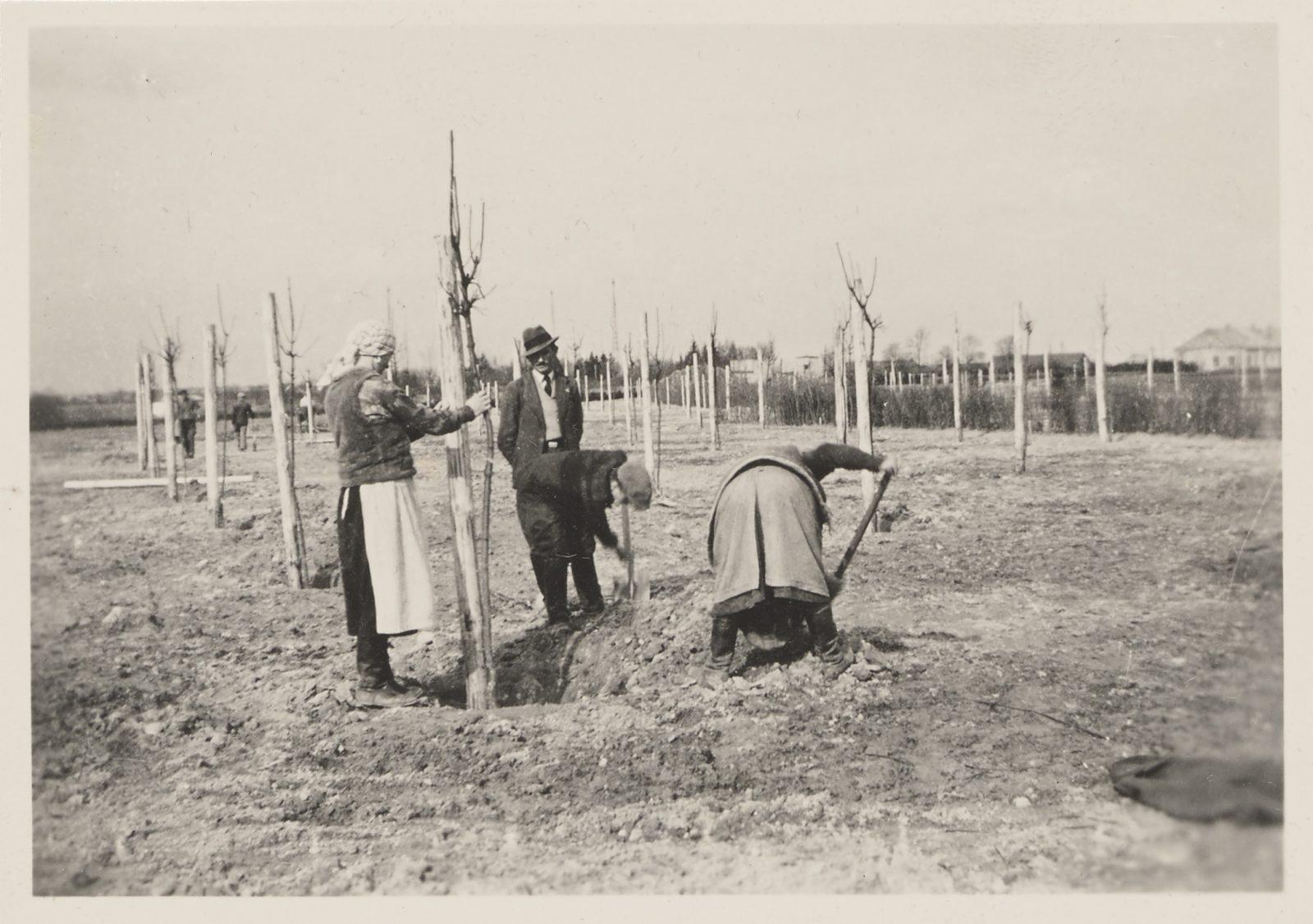 Photo album showing the construction of the horse racing track in Służewiec, photo Tadeusz Giżycki, 1936–1939 Polish Horse Racing Club in Warsaw, item no. 5279, catalogue no. X/47