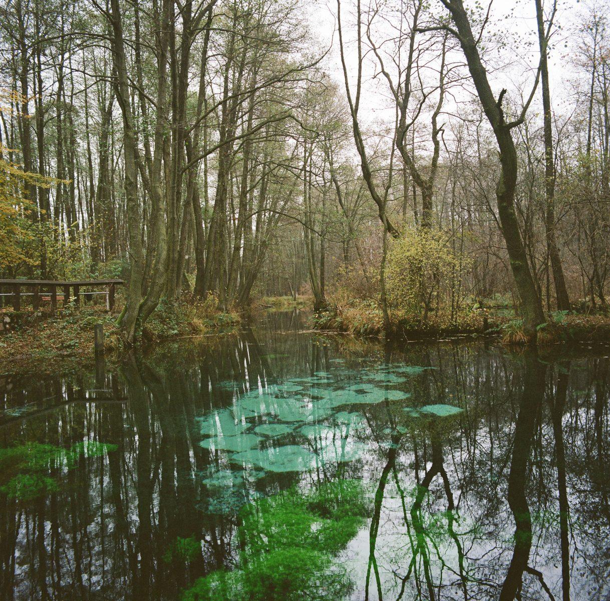Karst springs with intensely turquoise water around the bubbling springs. Blue Springs Park near Tomaszów Mazowiecki. Photo Simone De Iacobis, 2020